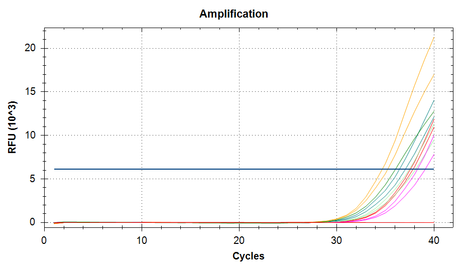 Amplifcation plots of VTG cDNA at 55C annealing temp