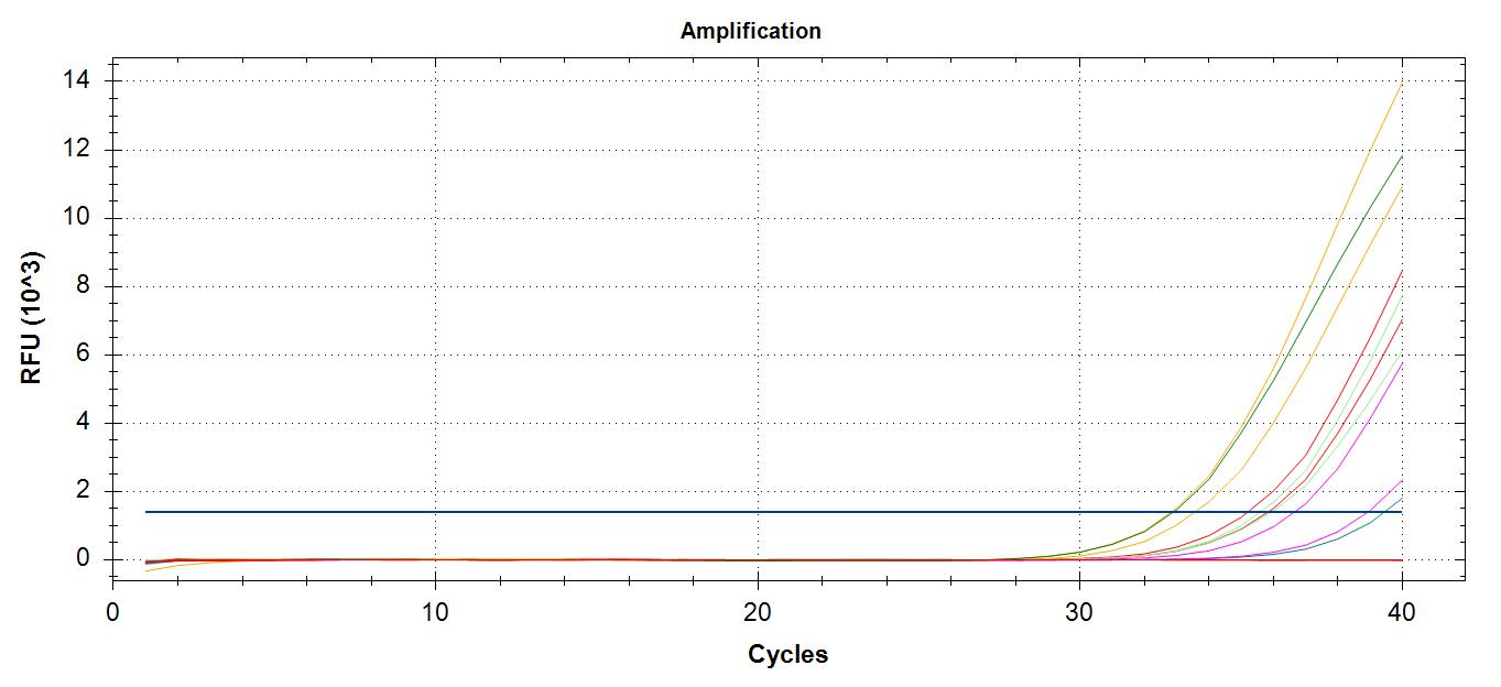 Amplifcation plots of VTG cDNA at 60C annealing temp