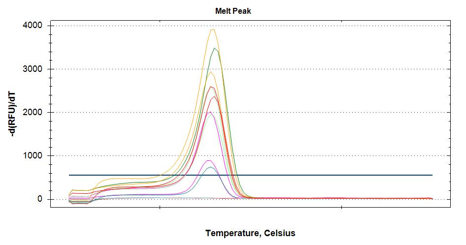 Melt curves of VTG cDNA at 60C annealing temp